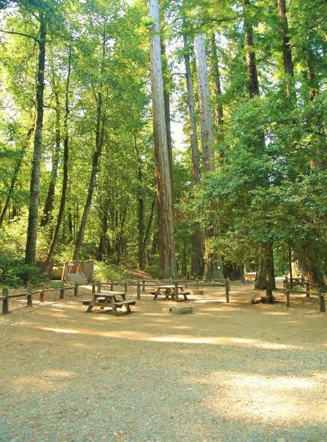 Redwoods-Gallery-4