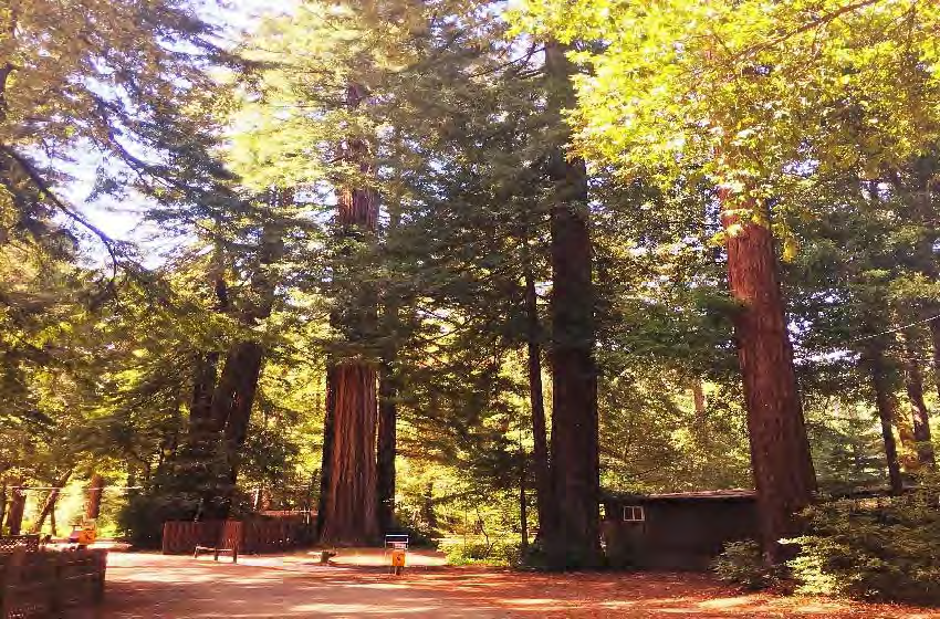 Redwoods-Gallery-9